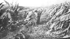 harvest_wide-f6e991c2ef959f904d0e9daf2a1af73c98db8392-s1600-c85